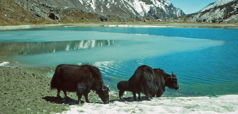Osthimalaya: Bhutan – Sikkim – Darjeeling